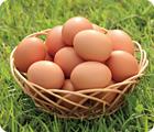 当社自慢おいしい卵