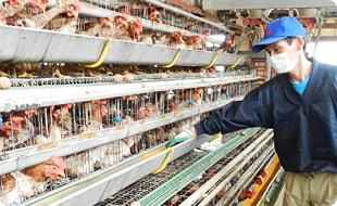 当社直営の養鶏場