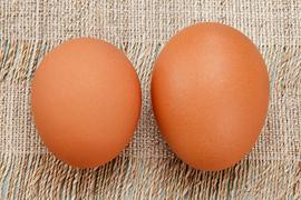 通常よりも小ぶりな初卵