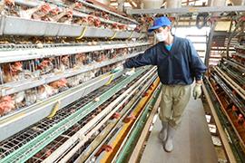 衛生管理も安心な養鶏場