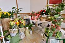 各種お花も販売中