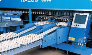 安全な卵づくり「検卵」
