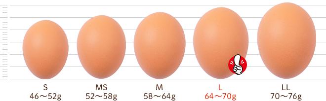 鶏卵別サイズ比較:卵の大きさと種類