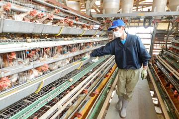 鶏が虫を食べない「高床開放鶏舎」